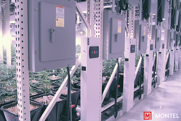 Cannabis Vertical Growing Racks