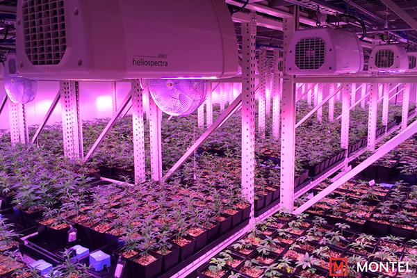 Cannabis Vertical Growing Racks